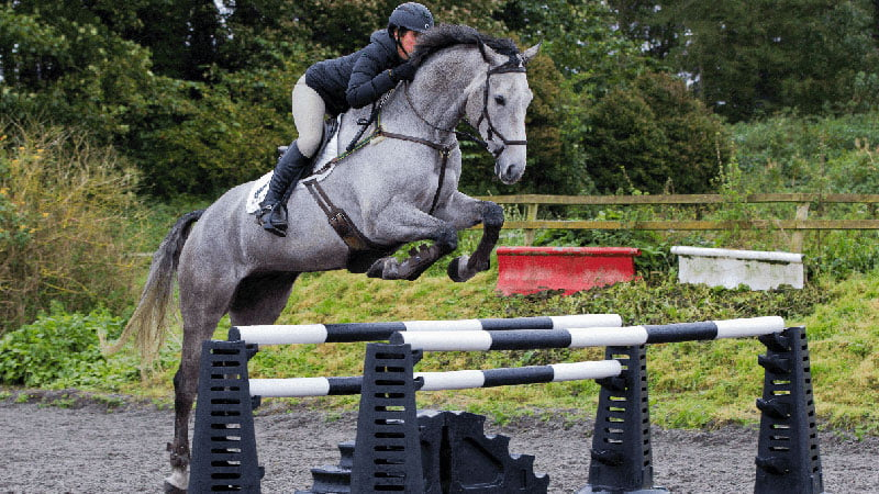 equestrian plastic products